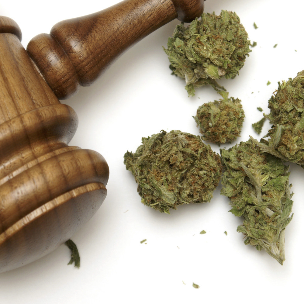 a judge hammer with marijuana buds